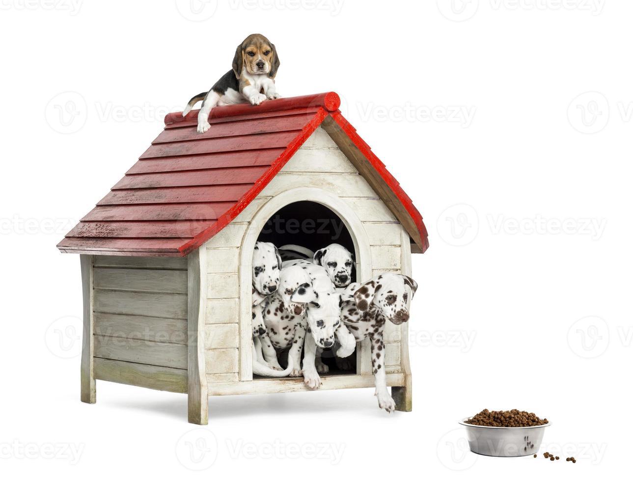 Grupo de cachorros jugando con una perrera, aislado foto