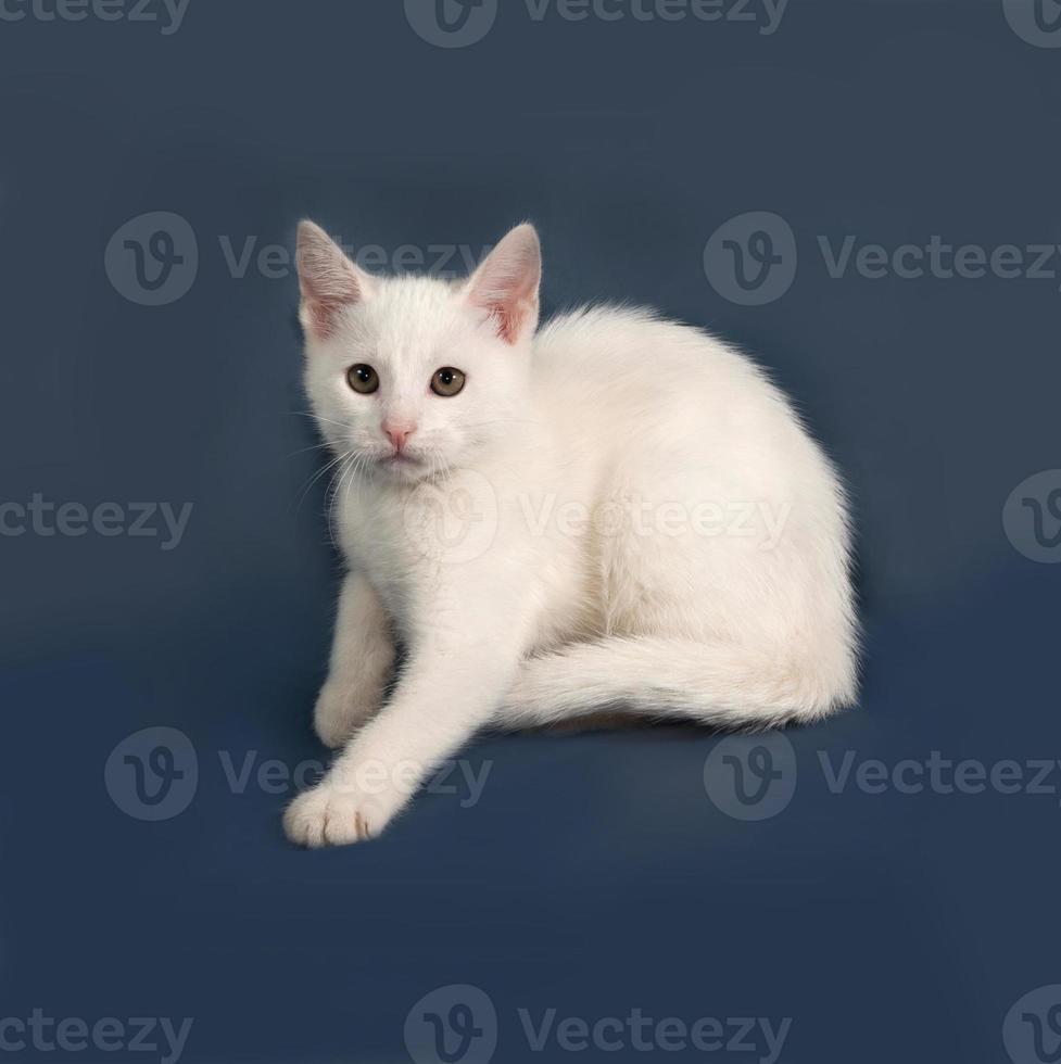 Small white kitten sitting on gray photo