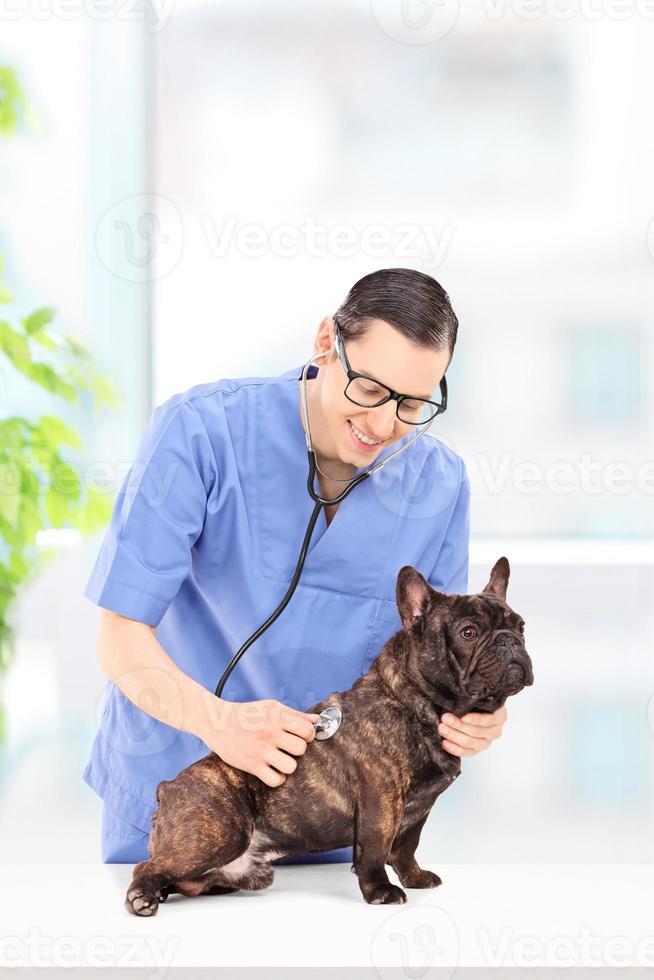 veterinario masculino examinando un perro en el hospital foto