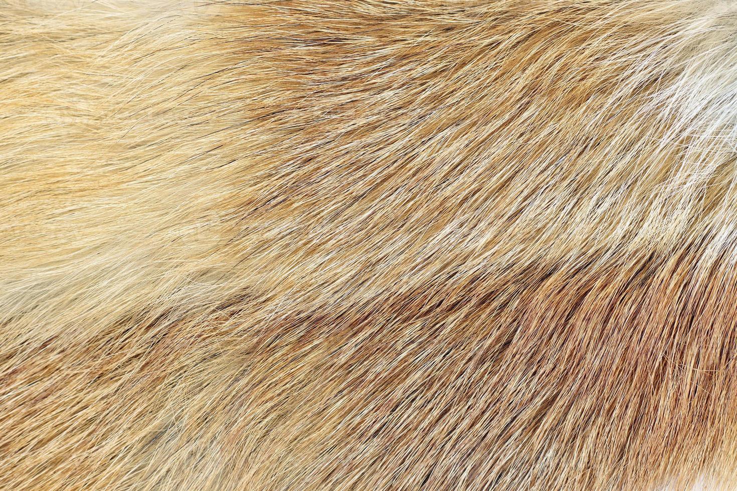 Fondo de piel de zorro rojo (vulpes sp.) foto