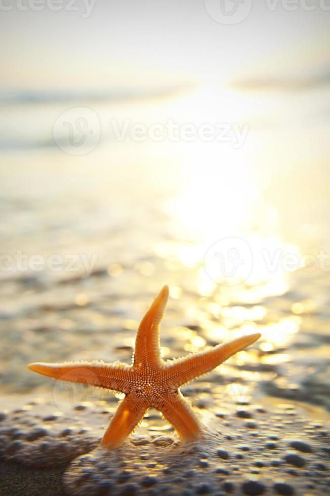 estrella de mar foto