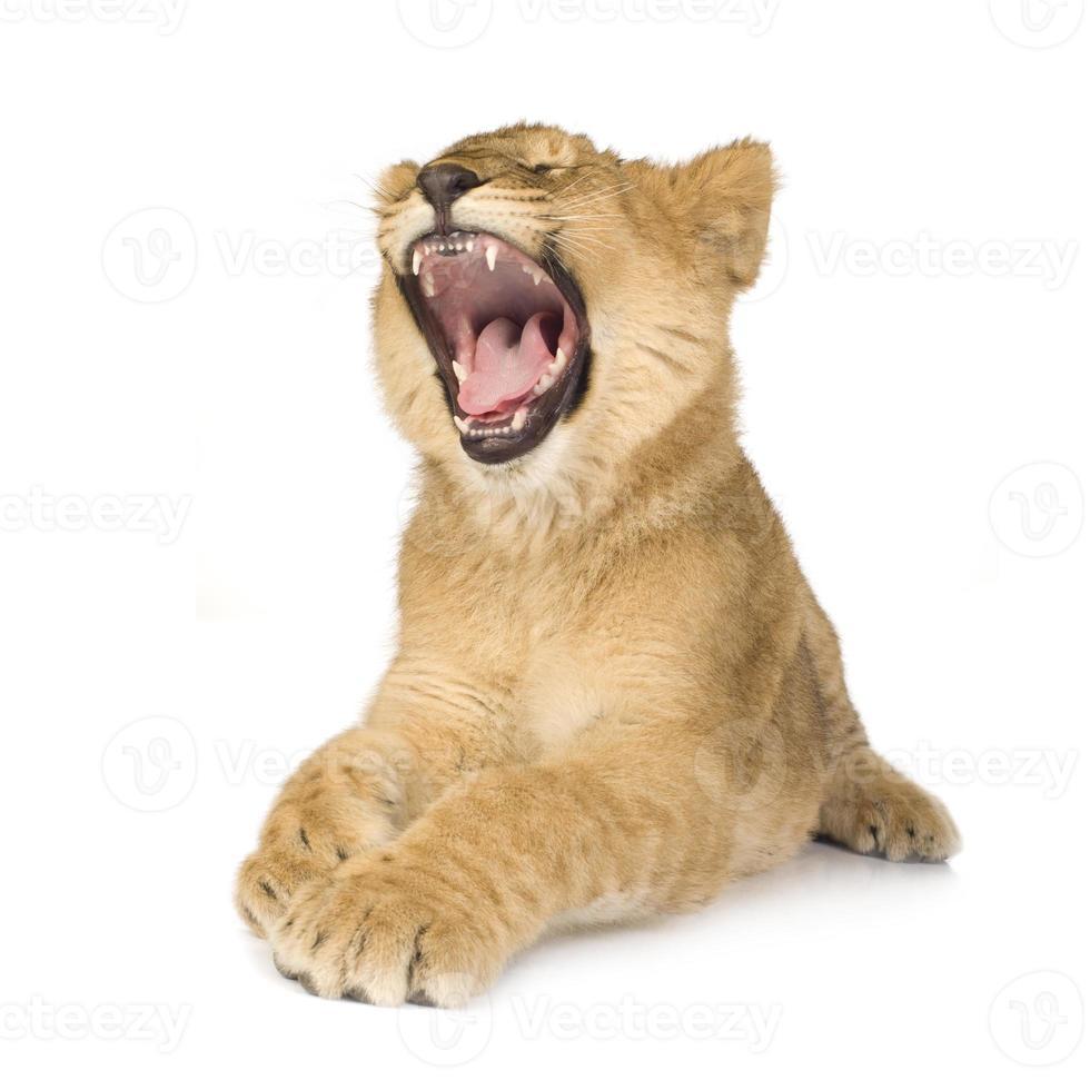 cachorro de león (6 meses) foto