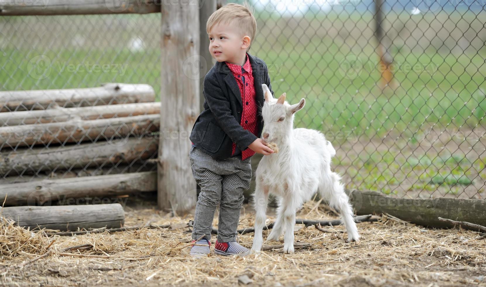 niño y cabras foto