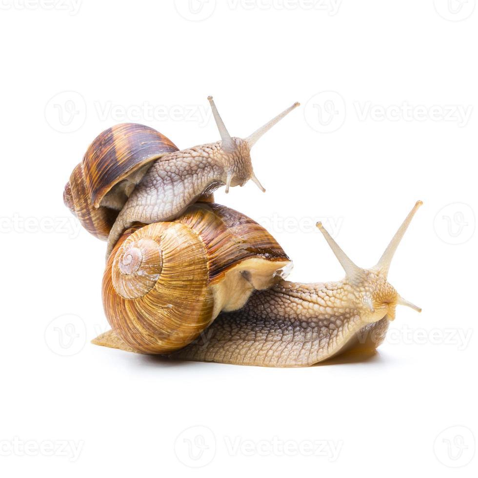snail piggyback photo