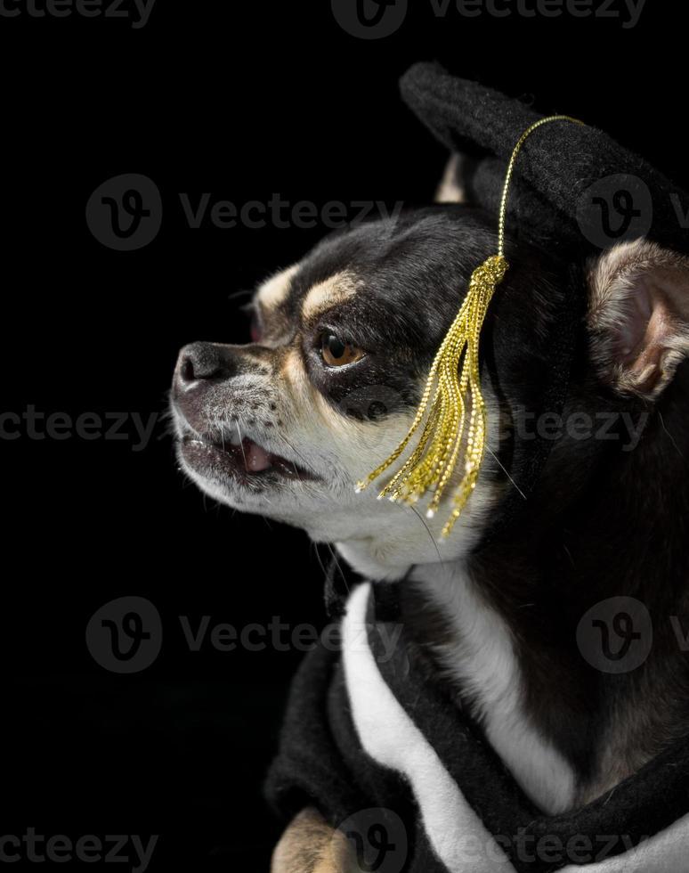 perro de graduacion foto
