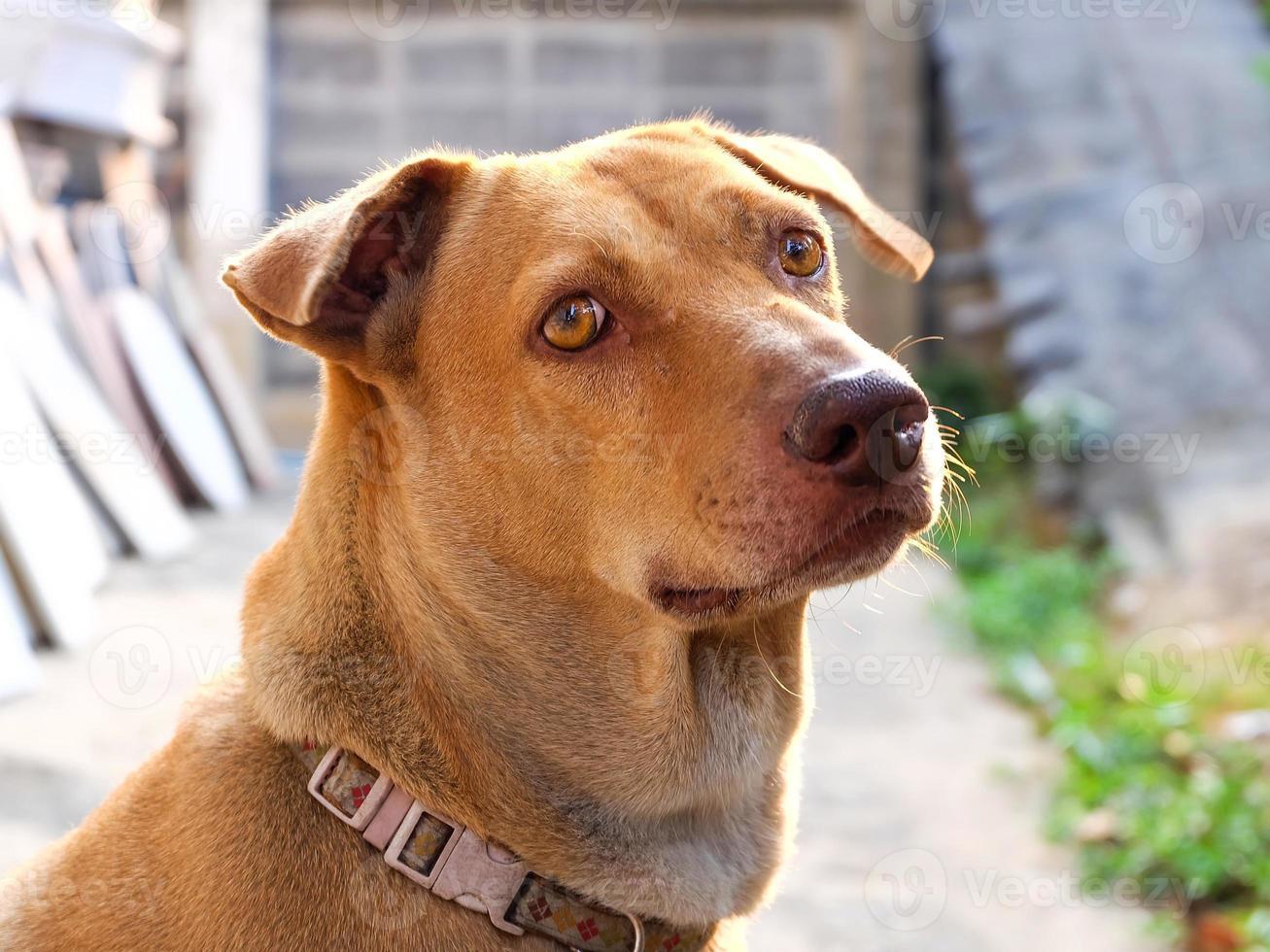 dog looking photo