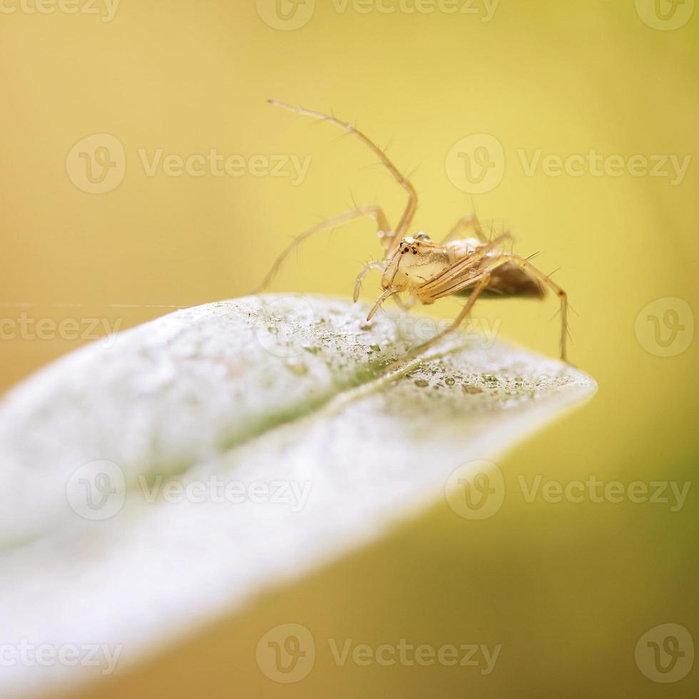 Spider on green leaves photo