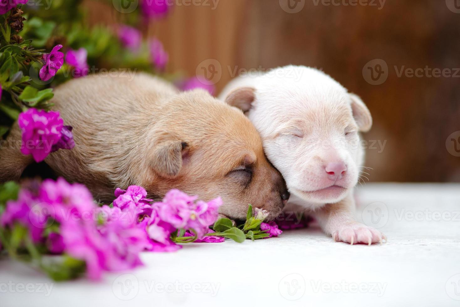 dos cachorros recién nacidos foto