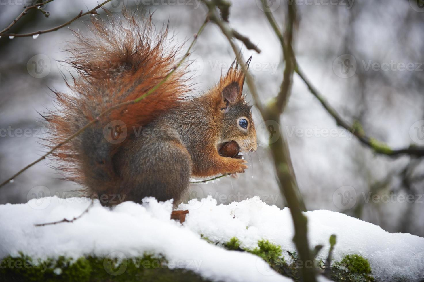 alimentación de invierno foto