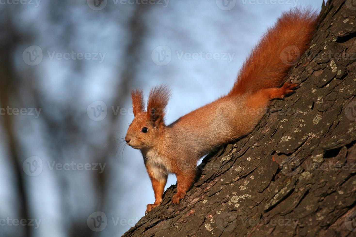 ardilla en el árbol a la luz del sol foto