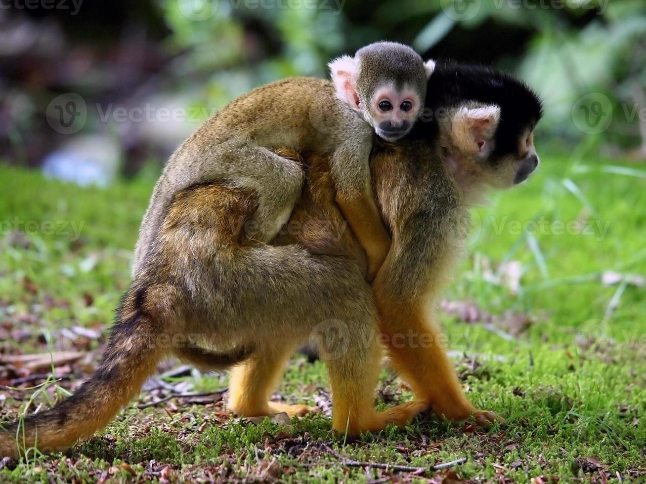 mono ardilla con niño foto
