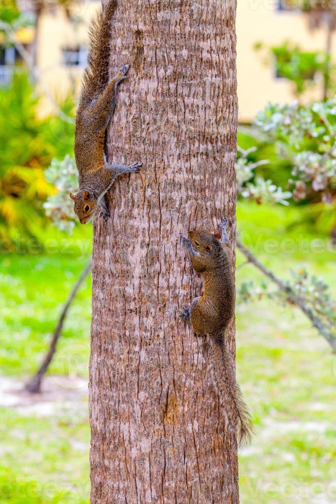 2 squirrels photo