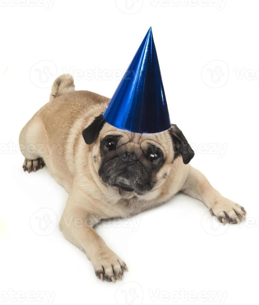 emotionele mopshond in een feestelijke hoed foto