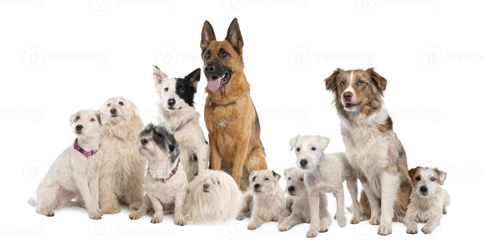 Large group of dogs photo