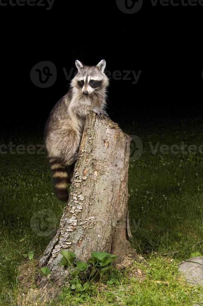 visitante en la noche foto