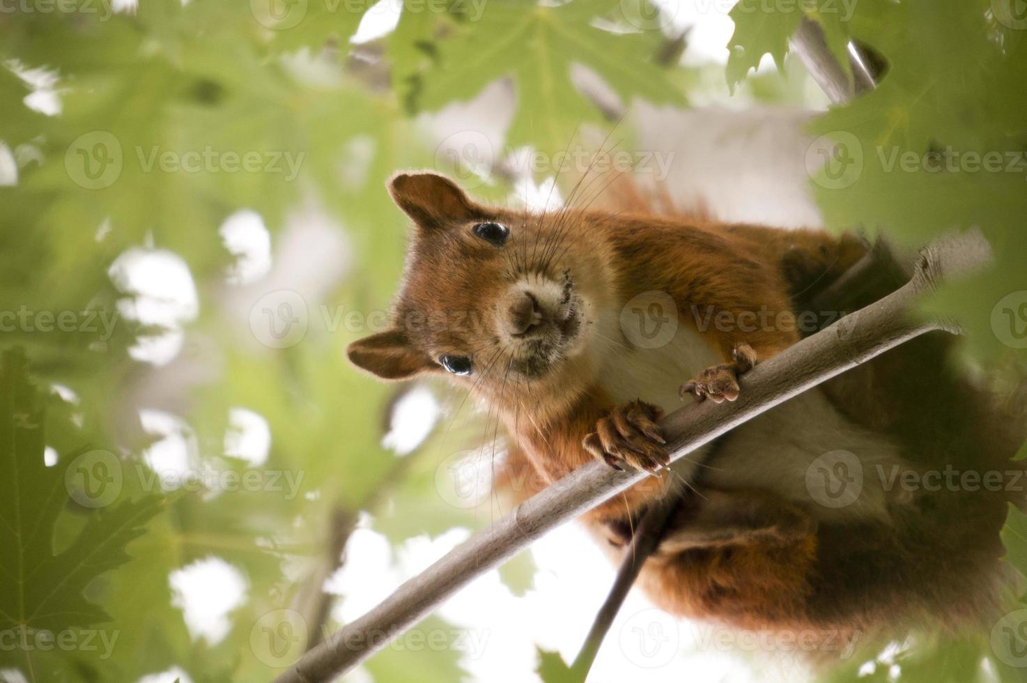 ardilla en un árbol foto