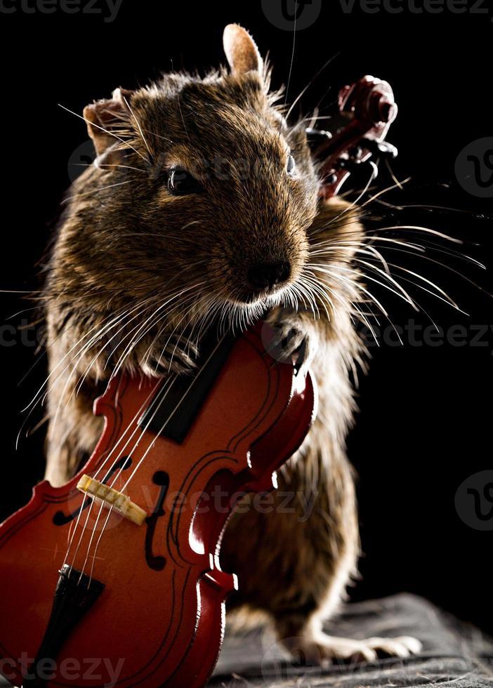 degu mouse tocando el violonchelo foto