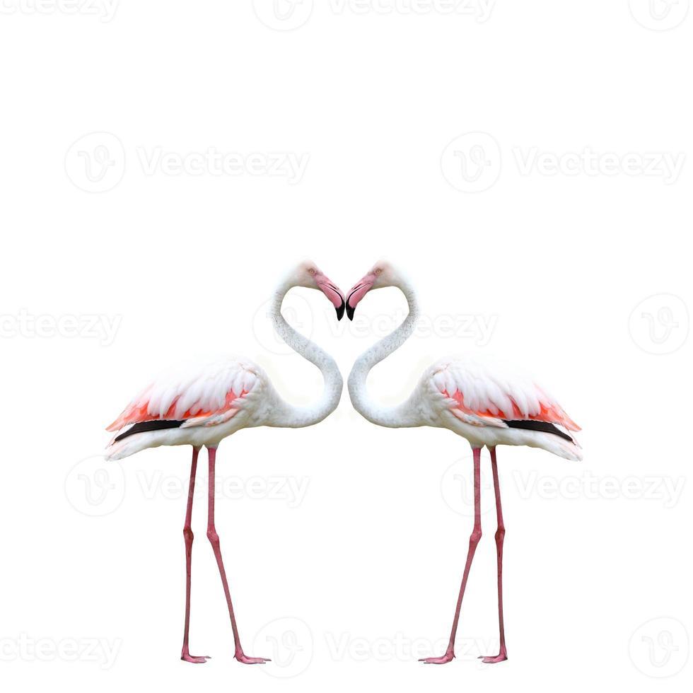 Two colorful flamingos photo