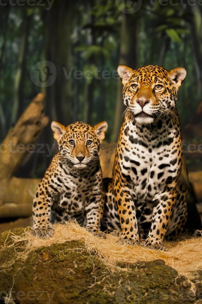 familia jaguar foto