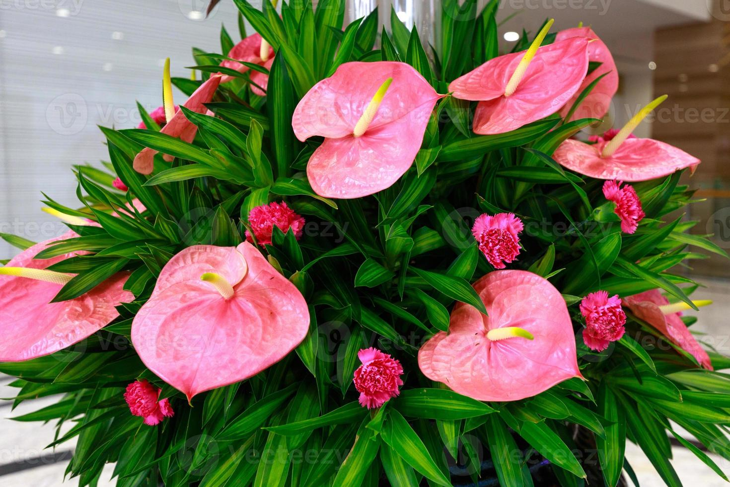 flor de anturio foto