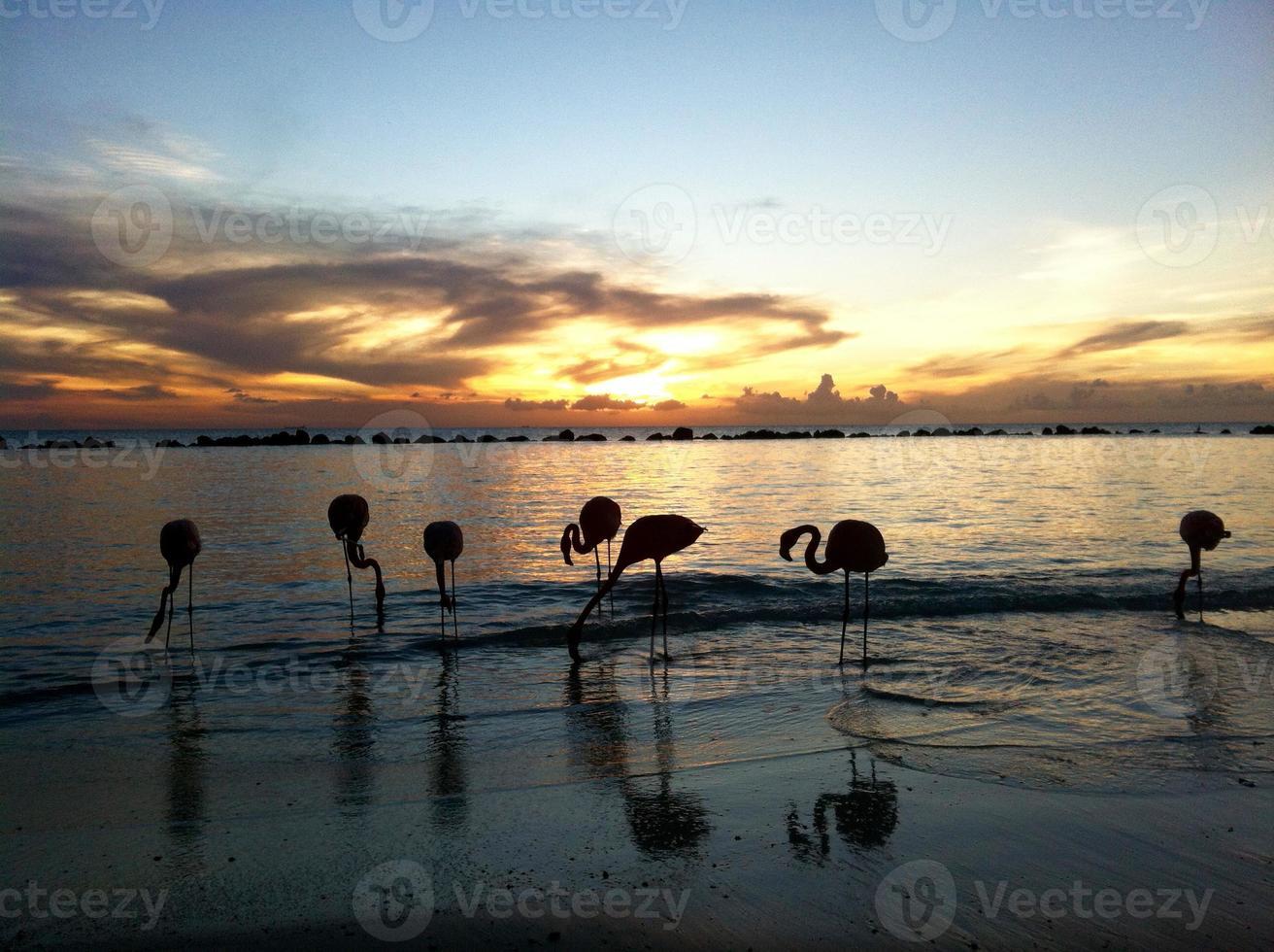 beautiful Flamingos on a paradise Beach photo