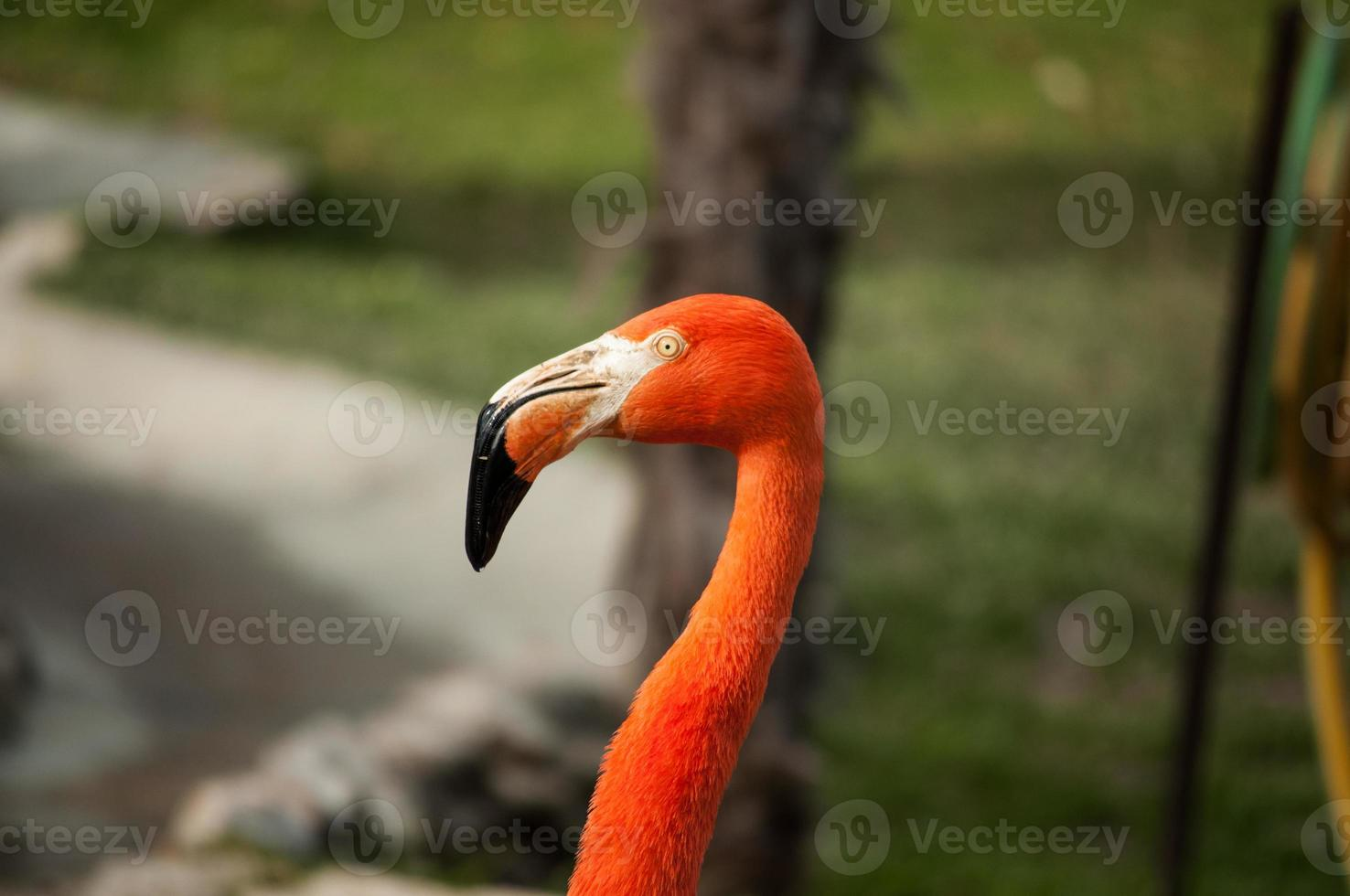 flamenco en el zoológico de lisboa foto