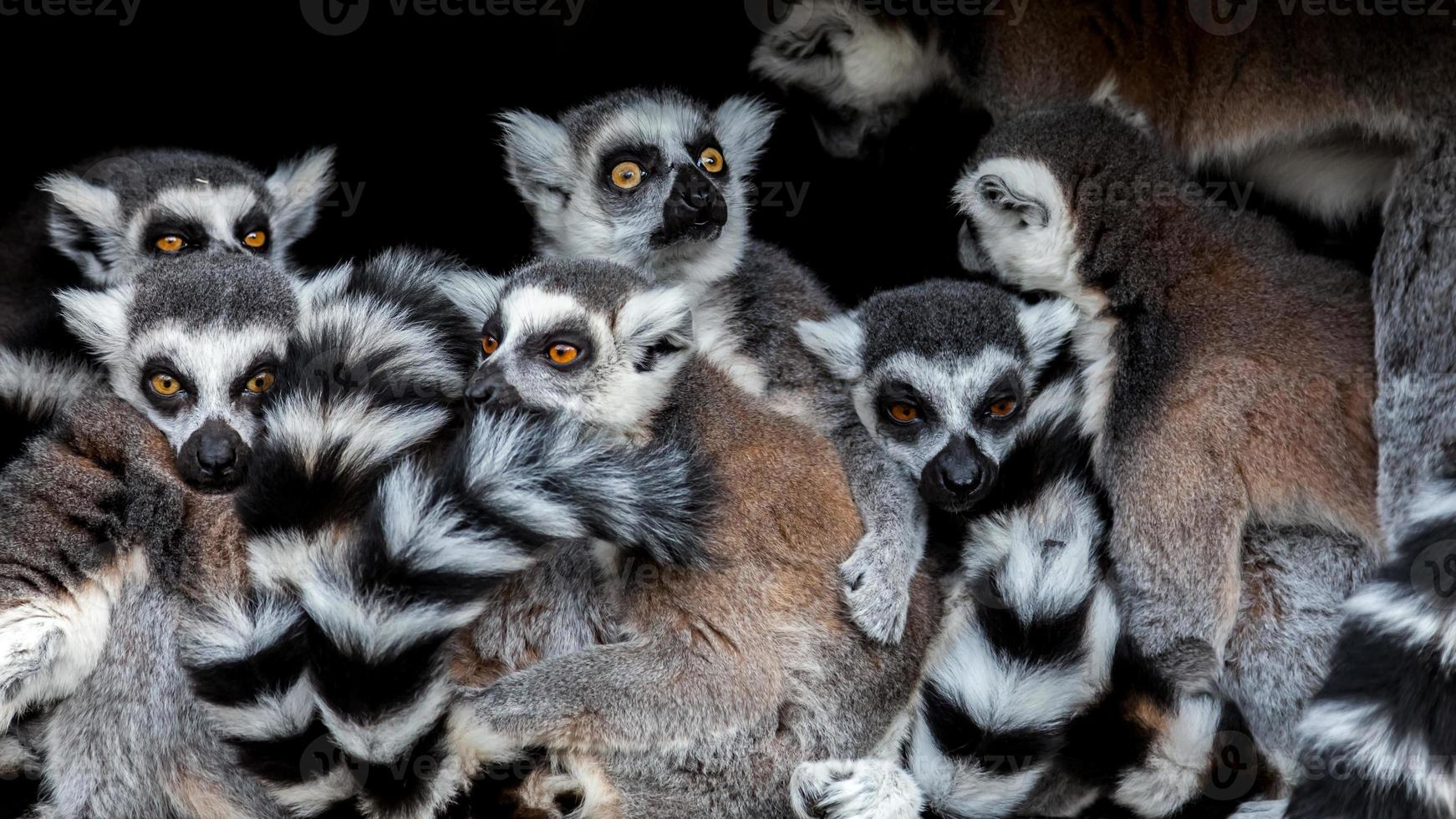 Meerkats ! photo