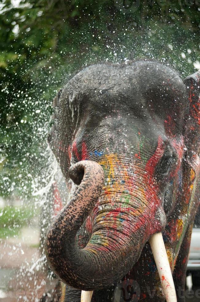 Joven elefante jugando agua. foto