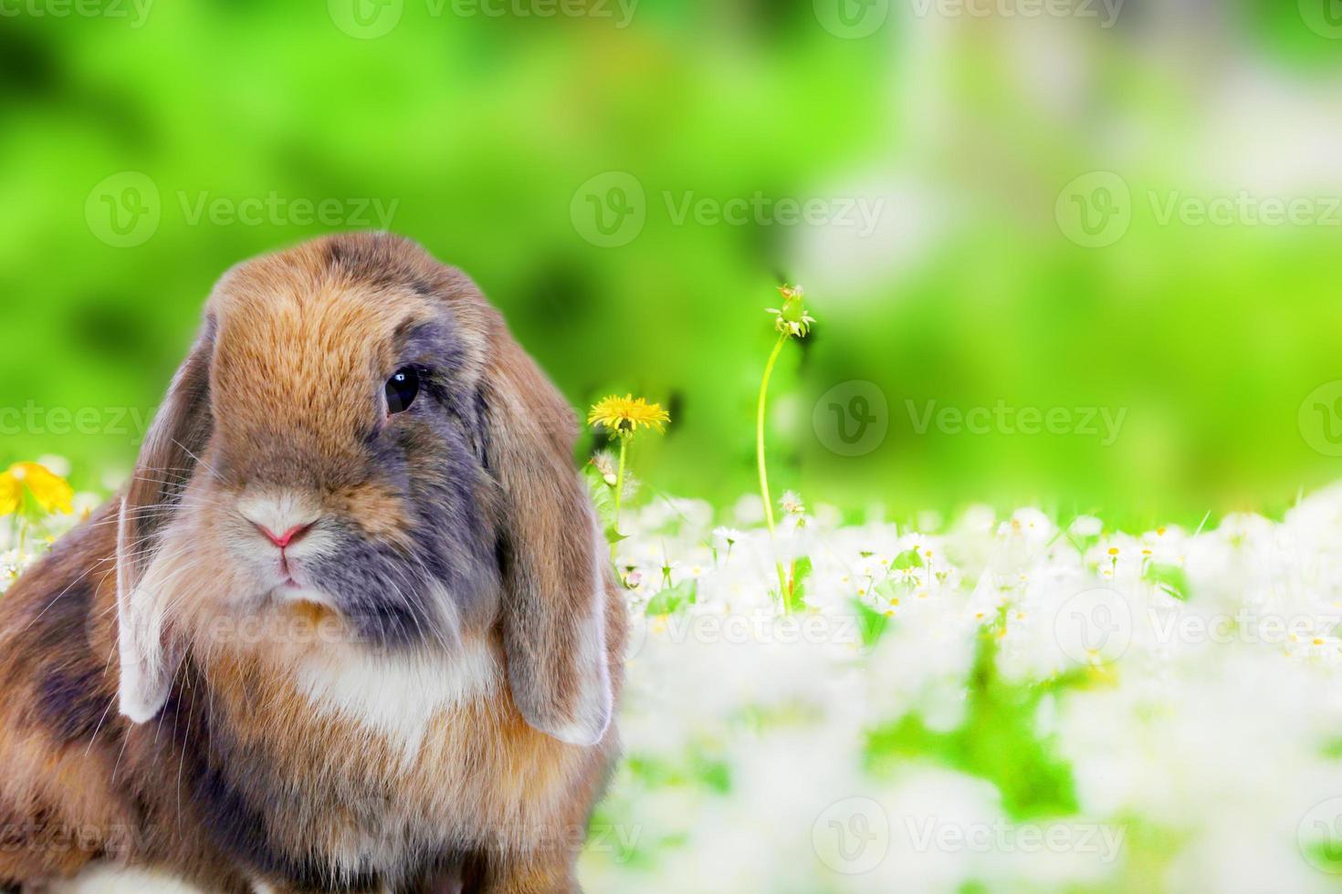 lindo conejo sobre fondo verde natural foto