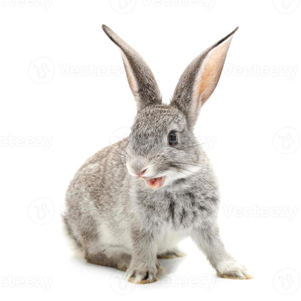 baby rabbit photo