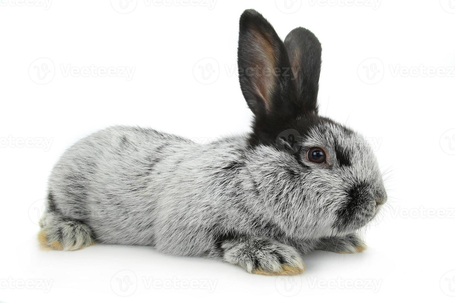conejo gris foto