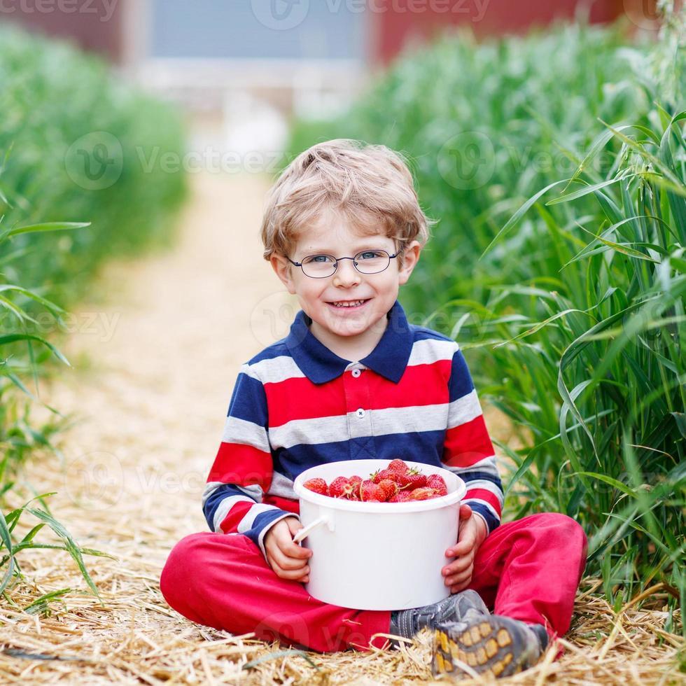 Niño recogiendo y comiendo fresas en la granja de bayas foto