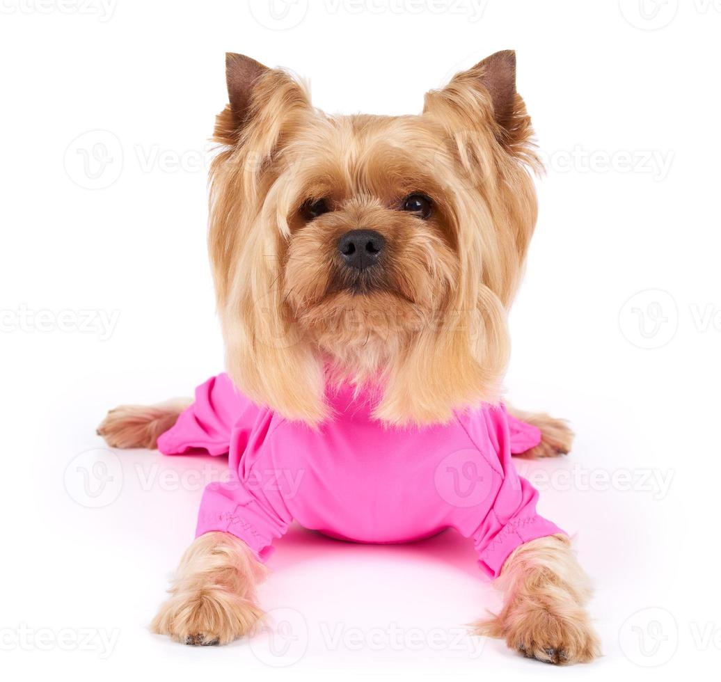 Dog in pink overalls photo