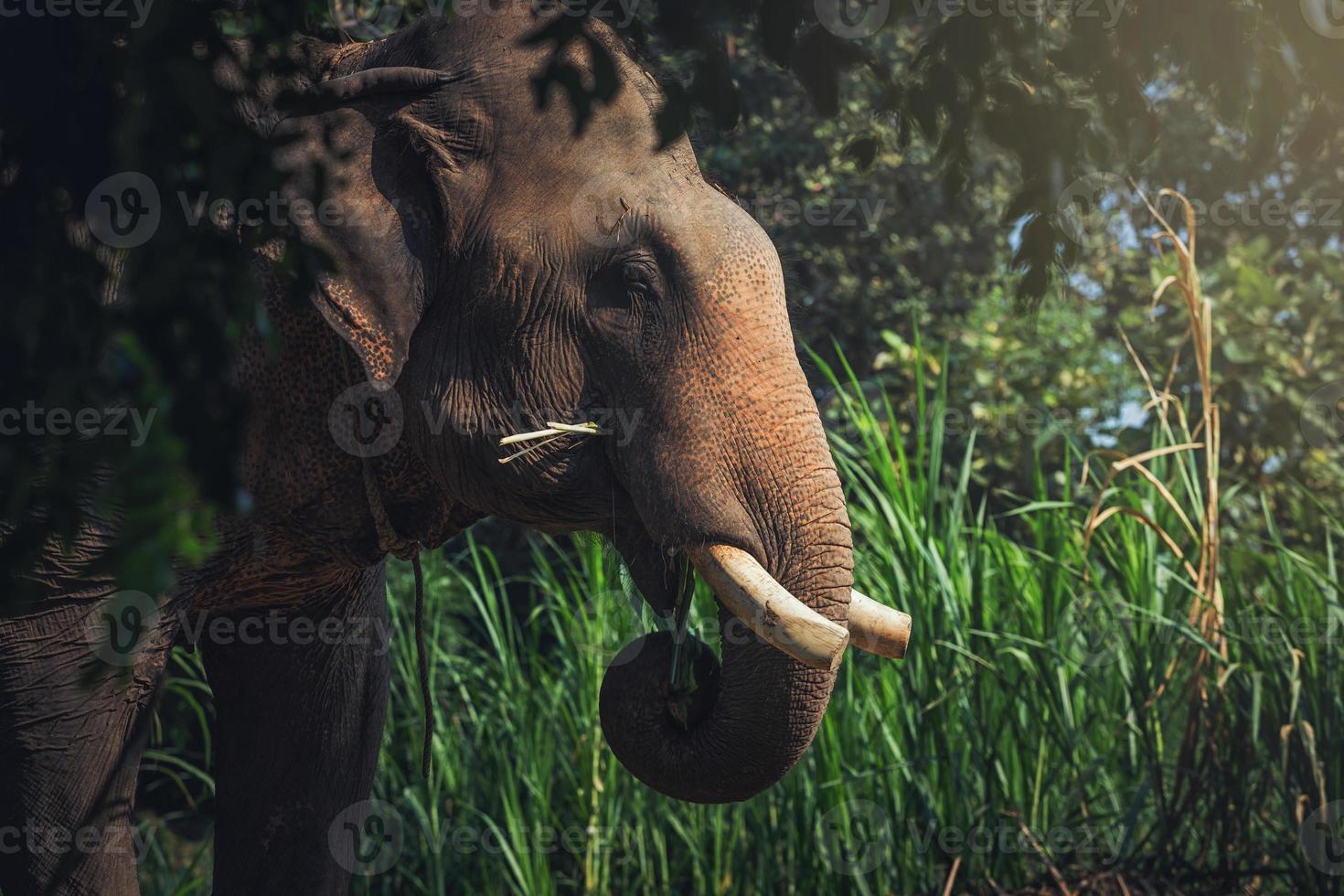 elefante foto