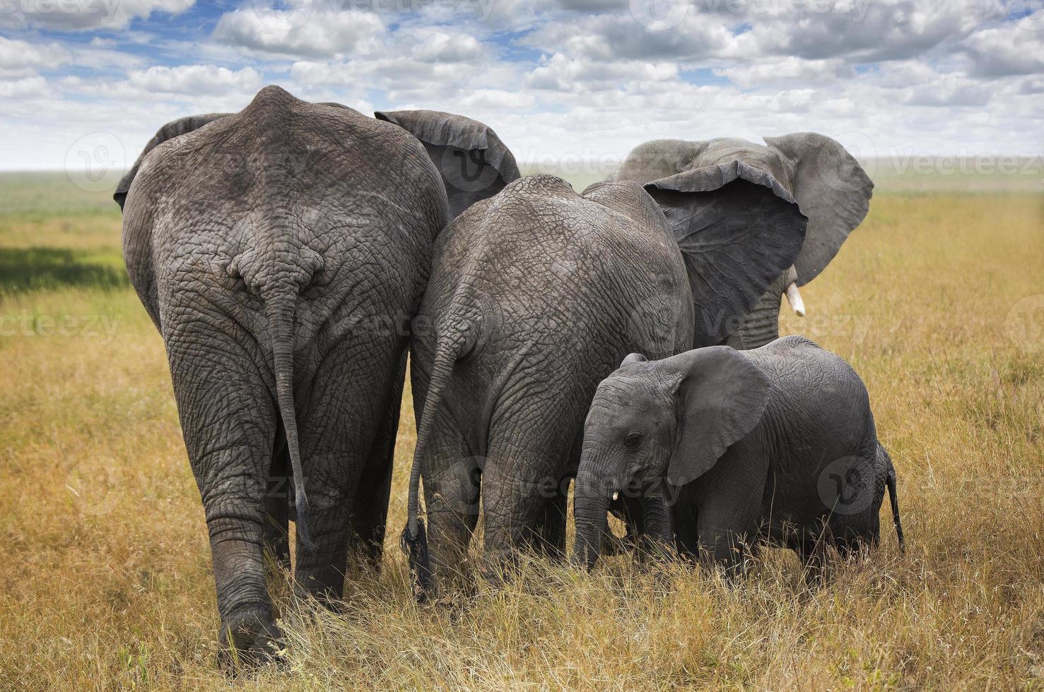 familia de elefantes foto