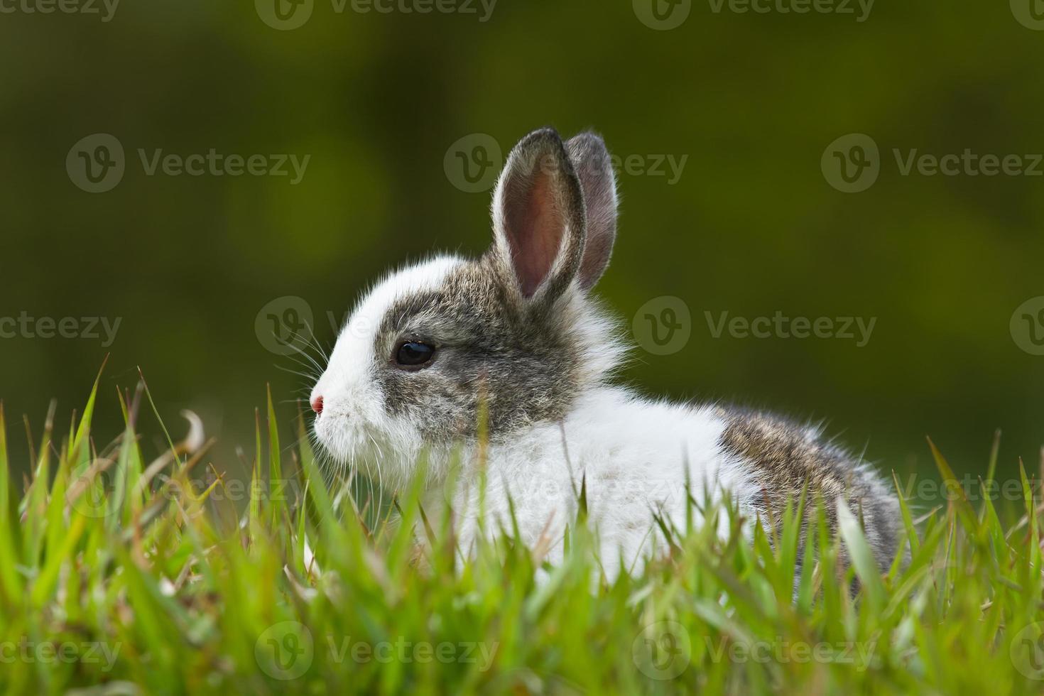 bebé conejo en pasto foto
