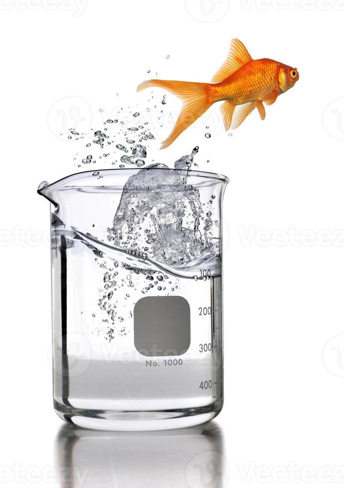 Goldfish saltando del vaso de laboratorio foto