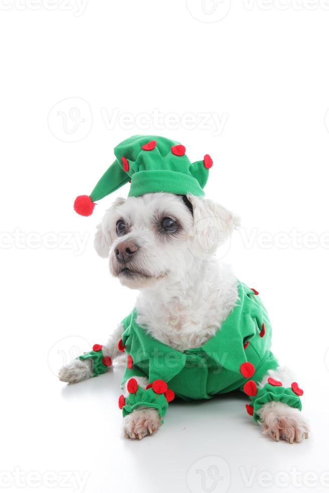 mascota bufón o duende navideño foto