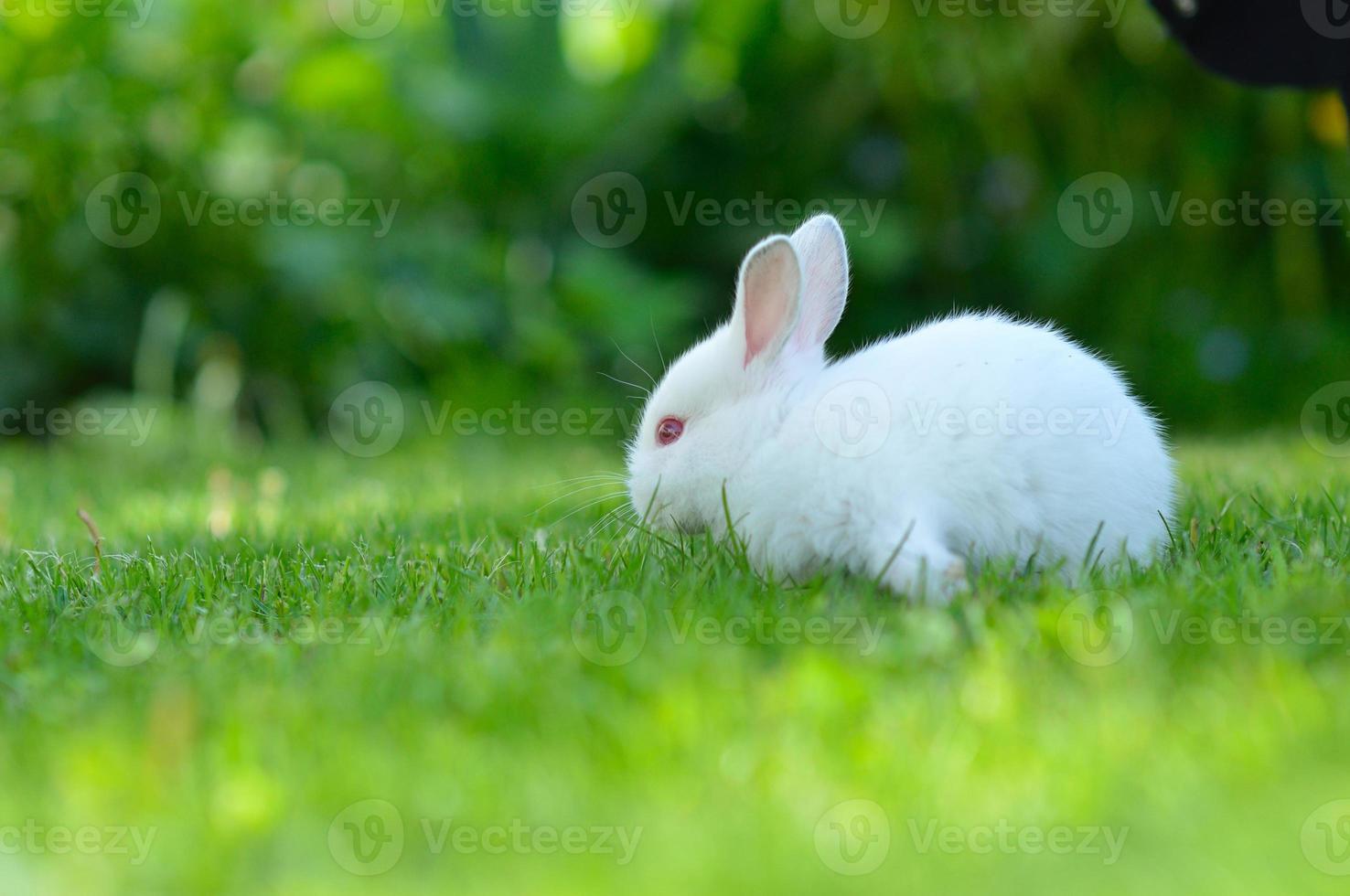 gracioso bebé conejo blanco en pasto foto