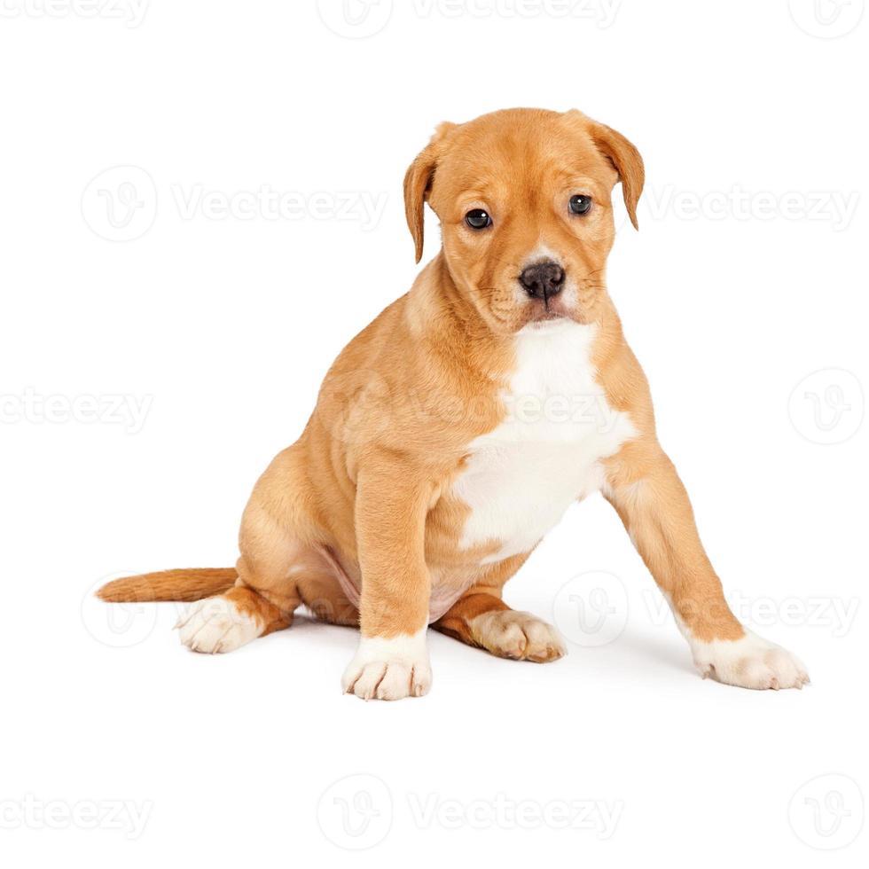 lindo cachorro mestizo sentado foto