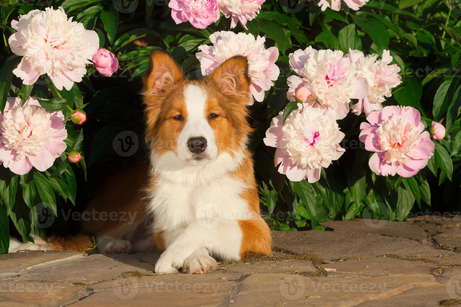 dog in flowers photo