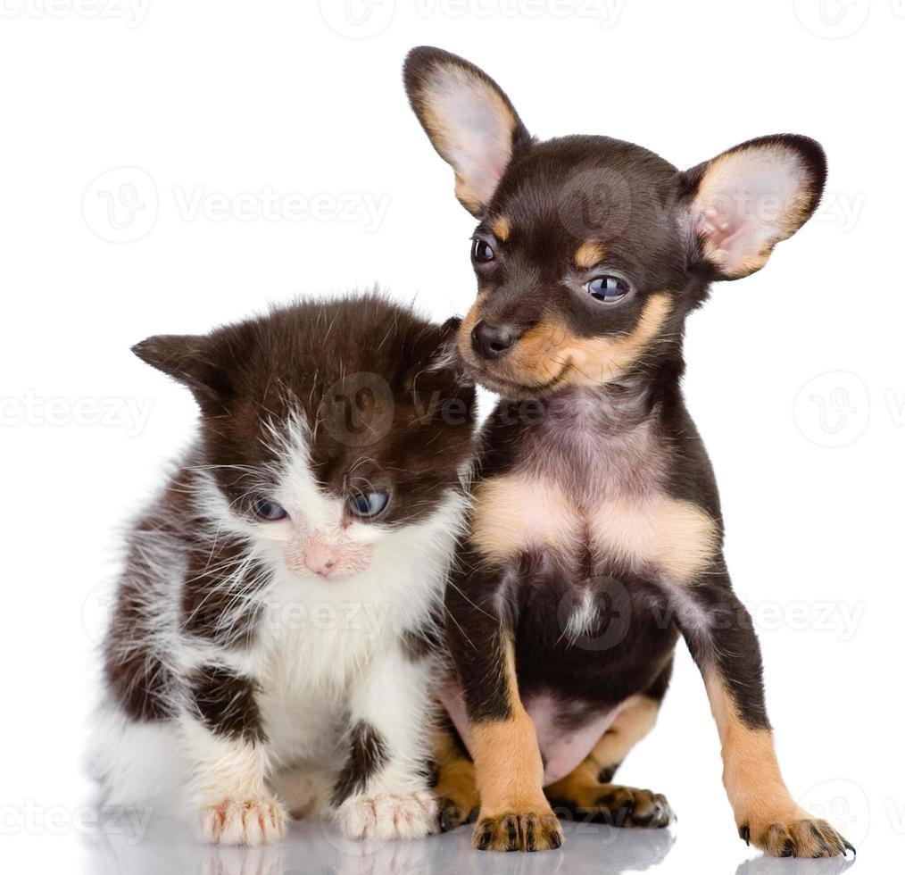 sad kitten and smiling dog photo