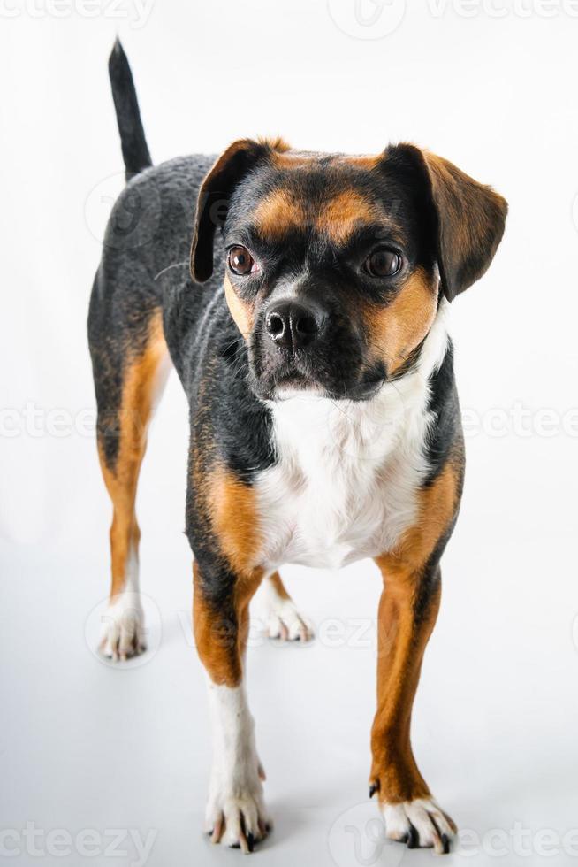 cachorro en blanco foto