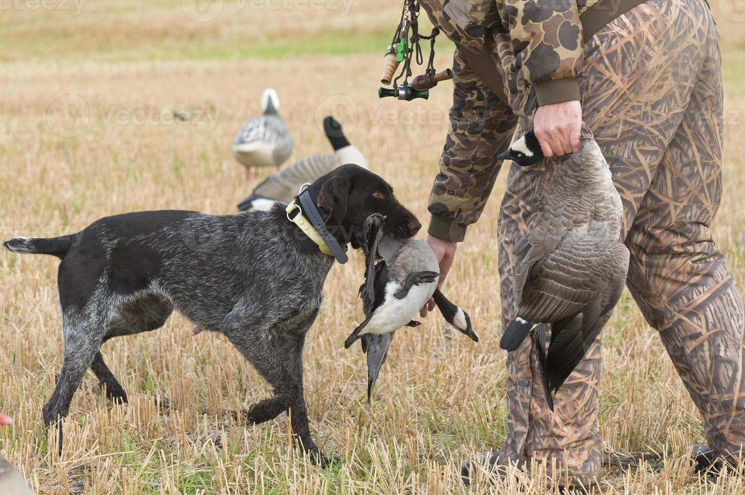 Goose Hunting photo