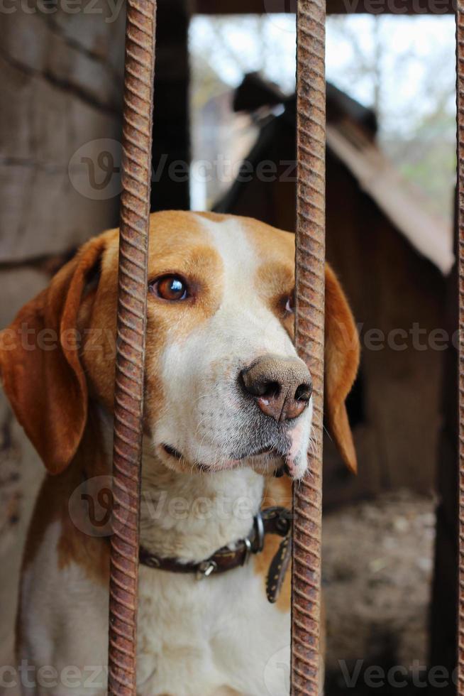 perro de caza foto