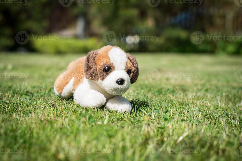 perro de juguete foto