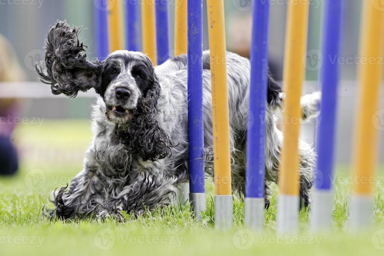 deporte canino foto