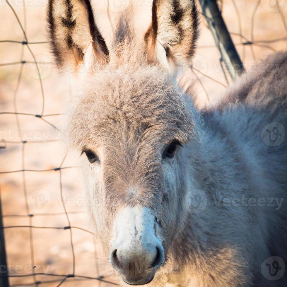 little donkey headstrong photo