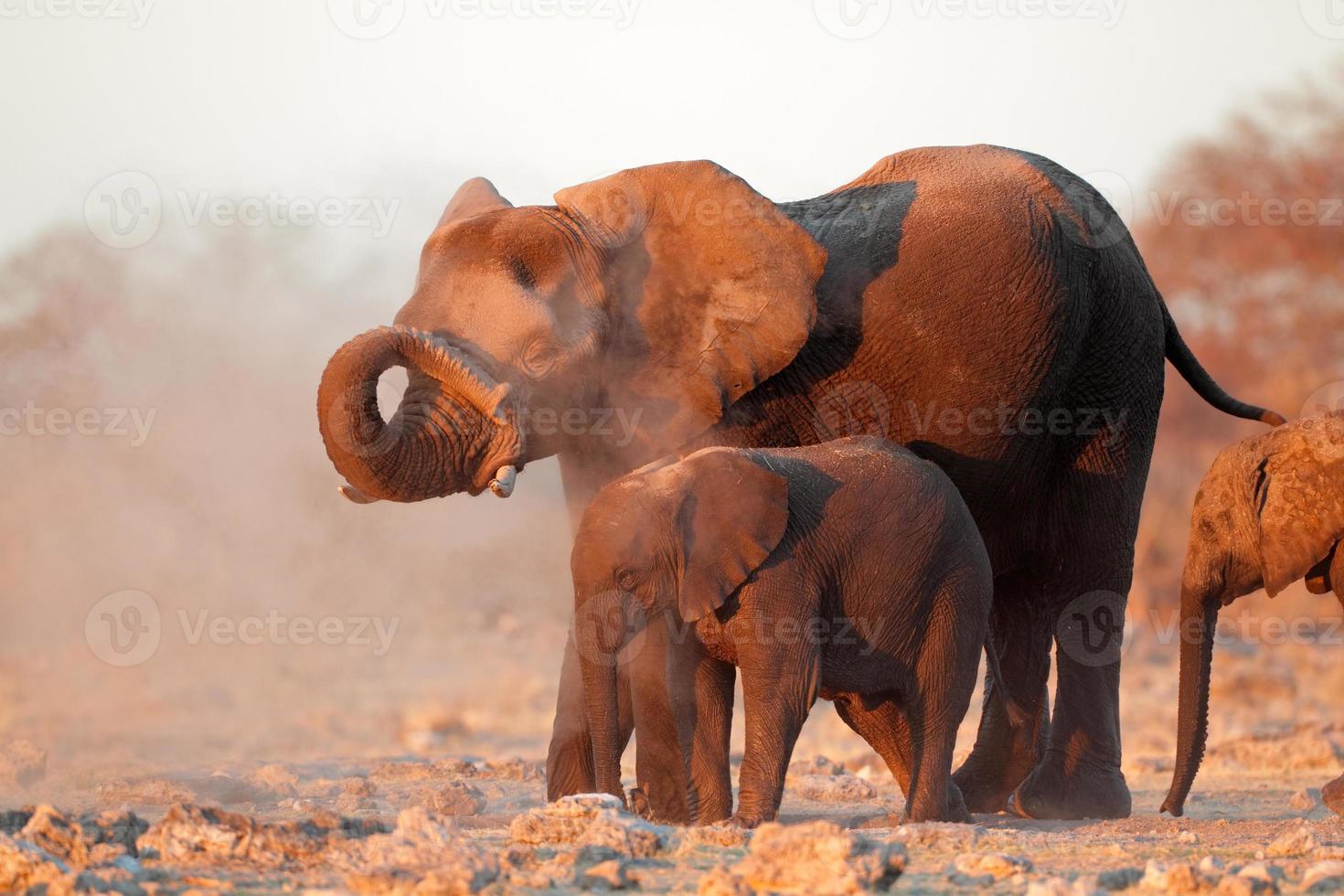 elefantes africanos cubiertos de polvo foto