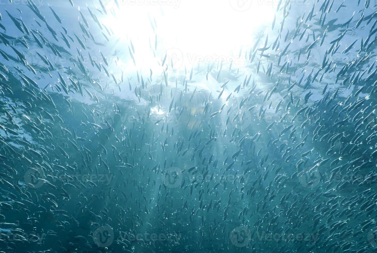 rayos de sol brillando a través de un banco de peces foto